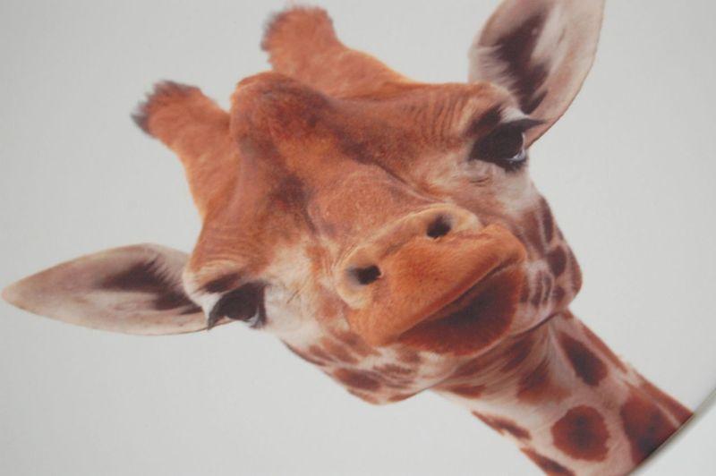 Kinderzimmerlampe Giraffe